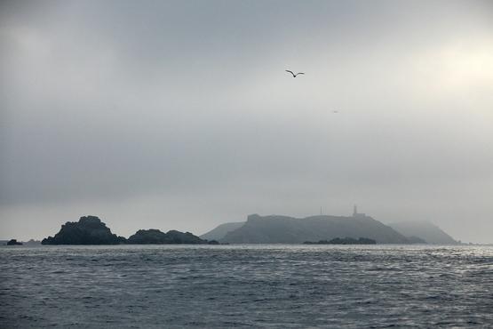 Les sept îles, réserve naturelle d'oiseaux