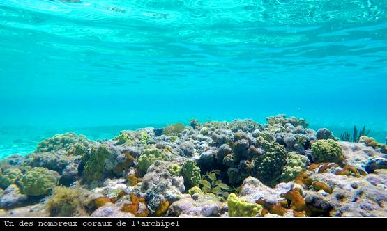 Une patate de corail, plus jolie vue sous l'eau