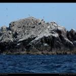 Une impressionnante série de rochers investie par les oiseaux au sud ouest d'Alderney.